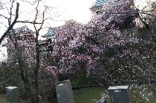 上田城226×150